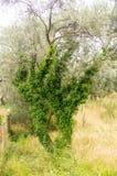 Exotisk växt i Budva, Montenegro Royaltyfri Fotografi