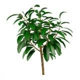 Exotisk växt tree4 Royaltyfri Foto