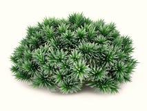 Exotisk växtbuske Royaltyfri Foto