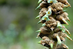 exotiska blommaberg för ecuadorian Arkivfoto