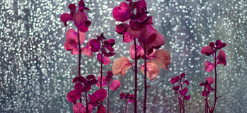 exotiska blommor arkivfoto