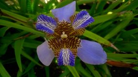 exotiska blommor arkivbild
