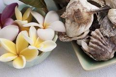 Exotiska blommor och snäckskal Royaltyfri Foto