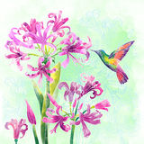 Exotiska blommor och surrfågel royaltyfri fotografi