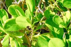 Exotiska detaljerade Sunny Leaves Royaltyfri Foto