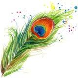 Exotiska diagram för påfågelfjäderT-tröja påfågelillustration med texturerad bakgrund för färgstänk vattenfärg Arkivfoto