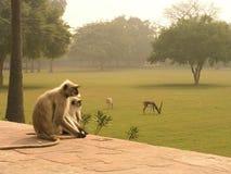 exotiska djur Royaltyfria Bilder