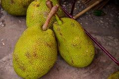 Exotiska durians, Thailand Royaltyfri Bild