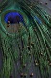 exotiska fåglar Royaltyfria Bilder