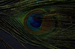 exotiska fåglar Royaltyfri Bild