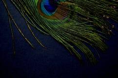 exotiska fåglar Royaltyfri Fotografi