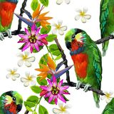 Exotiska fåglar och härliga blommor Arkivfoto