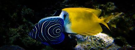 exotiska fiskar Arkivbild