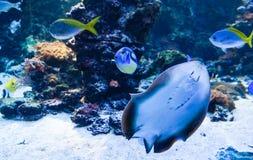 Exotiska fiskar i havet Arkivbilder