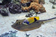 Exotiska fiskar i havet Fotografering för Bildbyråer