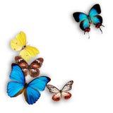 Exotiska fjärilar royaltyfria bilder
