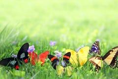 Exotiska fjärilar som inramar bakgrund för grönt gräs Arkivfoto