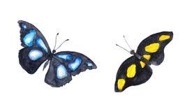 exotiska fjärilar vattenfärg Arkivfoto