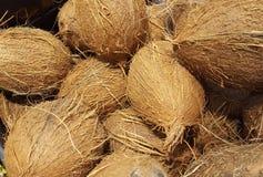 Exotiska fruktdetaljer för kokosnöt royaltyfria foton