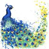 Exotiska påfågelT-tröjadiagram påfågelillustration med texturerad bakgrund för färgstänk vattenfärg ovanlig illustrationvattenfär