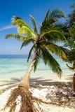 Exotiska palmträd Royaltyfri Bild