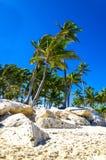 Exotiska palmträd på den steniga kusten av det karibiskt Arkivbild