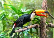 exotiska papegojor arkivbild