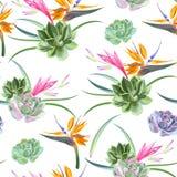 Exotiska sömlösa blommor och suckulenter royaltyfri illustrationer