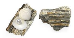 Exotiska skal och pärla som isoleras på vit bakgrund Fotografering för Bildbyråer