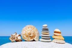 Exotiska skal på bakgrunden för hav och för blå himmel Utrymme för text Arkivbild