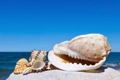 Exotiska skal på bakgrunden för hav och för blå himmel Royaltyfria Foton