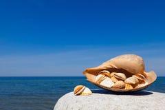 Exotiska skal på bakgrunden för hav och för blå himmel Utrymme för text Fotografering för Bildbyråer