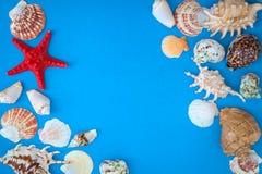 Exotiska snäckskal och sjöstjärnasamling arkivbild