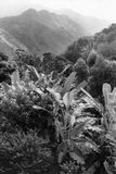 Exotiska träd på bakgrunden av berg Sri Lanka Royaltyfri Fotografi