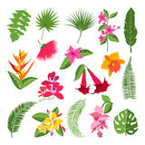 Exotiska tropiska blommor och sidor Vektorillustrationer av växter stock illustrationer