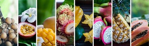 Exotiska tropiska frukter sund begreppsmat Organisk mat Collage av tropiska färgfrukter Arkivbild