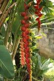 Exotiska växter i Bali 01 Royaltyfria Bilder
