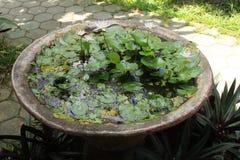 Exotiska växter i Bali 02 Arkivbild