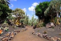 Exotiska växter i botanisk trädgård i den Fuerteventura ön arkivbilder