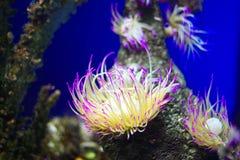 Exotiskt akvarium royaltyfri bild