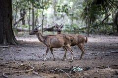 Exotiskt djur för Komodo öIndonesien drake Royaltyfri Foto