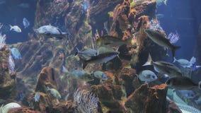 Exotiskt fiskbad i akvariet stock video