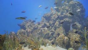 Exotiskt fiskbad i akvariet lager videofilmer