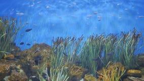 Exotiskt fiskbad i akvariet arkivfilmer