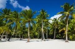 Exotiskt gömma i handflatan skogen och solig sand på stranden Royaltyfri Foto