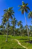 Exotiskt gömma i handflatan skogen på den tropiska ön Royaltyfria Foton