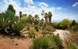 Exotiskt landskap med palmträd, agave och blå himmel royaltyfri fotografi