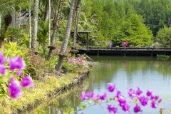 Exotiskt ställe bredvid ett damm Koh Chang, Thailand Arkivbilder
