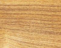 exotiskt trä Royaltyfri Bild
