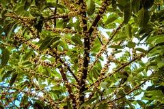 Exotiskt träd i Thailand Royaltyfri Foto